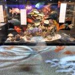 The watery floor of the ocean exhibit