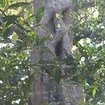 Foto de Rincon de La Vieja National Park