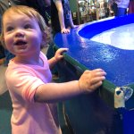 sting ray attraction