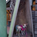 The dogs liked visiting Wekiva Island