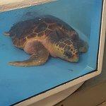 Billede af Gumbo Limbo Nature Center