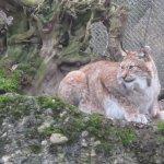 Tierpark Lange Erlenの写真