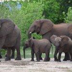 Foto Matetsi Private Game Reserve