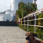 Dog at peace pagoda