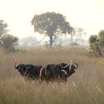 Beautiful sunsets, an incredible array of beautiful birds, hippos, elephants, water buffalo and,
