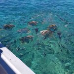 Barrier Reef visit arranged through Paradise Palms Resort.