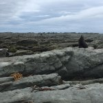 get up close and personal with the fur seals (keep 10m distance!)