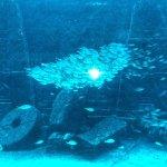 Photo of Marine Habitat at Atlantis