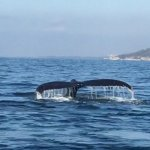 We encountered 4 whales which we were able to follow at different times.