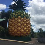 The big pineapple from the carpark.
