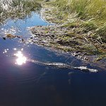 Photo of Buffalo Tiger's Airboat Tours