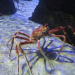 Photo de Underwater World Langkawi