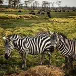 Billede af Lake Nakuru