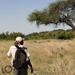 Photo de Somalisa Camp- African Bush Camps