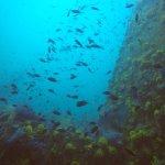Photo of Merlin Divers - Kamala Diving Center