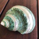 Polished shell