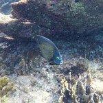 Fish - Bonaire