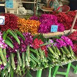 More beautiful orchids for only 10 baht