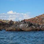 Aves marinas. Travesía Bahía de la ballena - Whale bay tour.