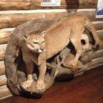 Zoological specimen