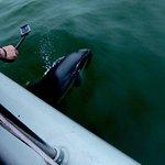 Heavyside Dolphin.