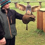 My son flying Oliver the Owl