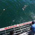 Photo of Marine Dynamics