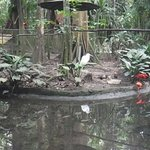 Photo de Bosque Rodrigues Alves - Jardim Botanico da Amazonia
