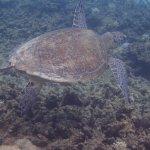 Photo de Ocean Safari