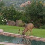 Photo de Garden of the Gods Club and Resort