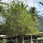 Photo of Krabi Tipa Resort