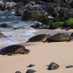 Turtles arriving