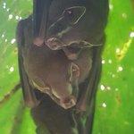 snoozing bats