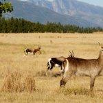 Foto di Kwetu Guest Farm