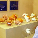 Shell World Museum Foto