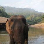Elephant feeding in the morning