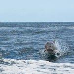 Foto de Kangaroo Island Marine Adventures
