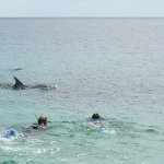 Swimming with the dolphins. Best to bring your own wet suit or rent one (for your size).