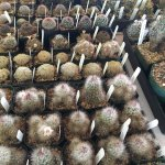 More photos from our annual Cactus & Succulent Sale.