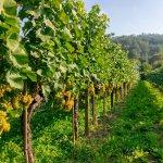 Hidden Wachau Valley Tour