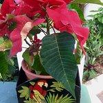 Foto de Jardín de Orquídeas de Sitio Litre