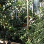Tropics section