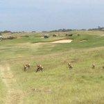 Photo of Oubaai Golf Course