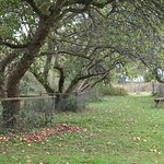 Tewin Orchard照片