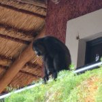 Monkey on a balcony