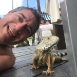Iguanas very friendly. Huts being delivered. Exercise in the pool to music, and iguanas.