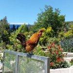 Photo de Phoenix Parc Floral de Nice