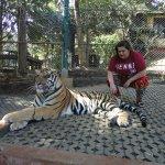 Photo of Tiger Kingdom