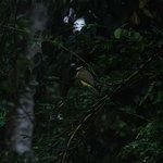 Foto de Selva Verde Lodge