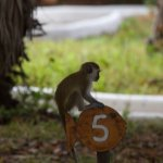 Monkey on my cottage sign